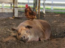 Afbeelding behorende bij The Biggest Little Farm